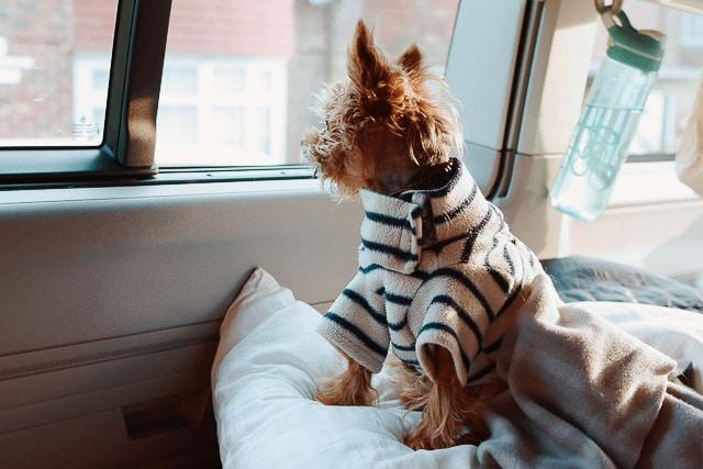 Im Wohnmobil mit Hund