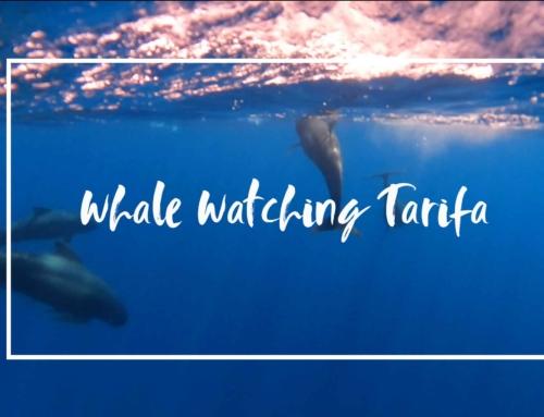 Whale watching in Tarifa, eine unfassbar schöne Erfahrung