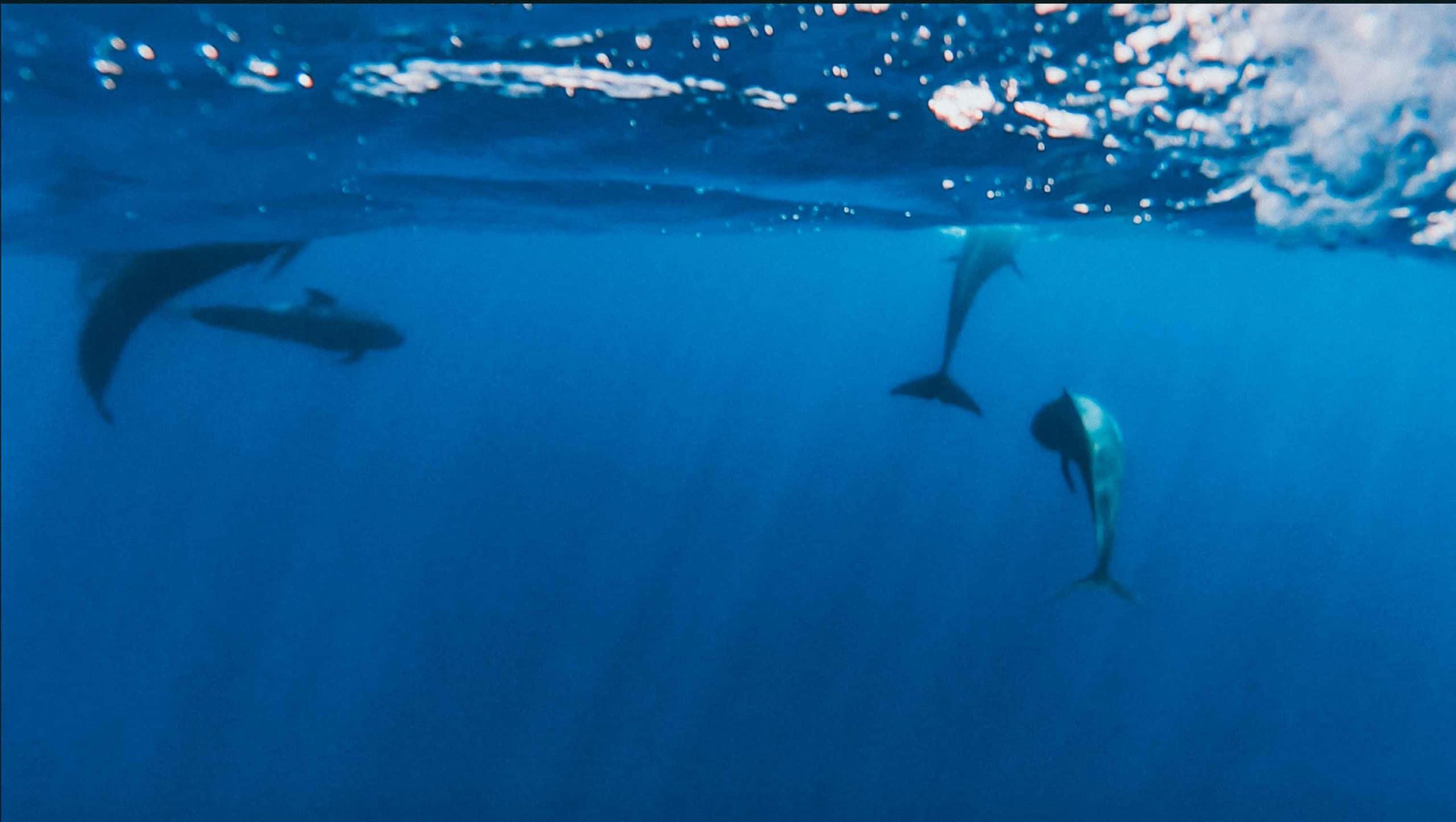 Whale Watching Tarifa scaled
