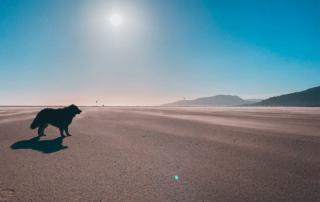 Moja, Hund am Strand